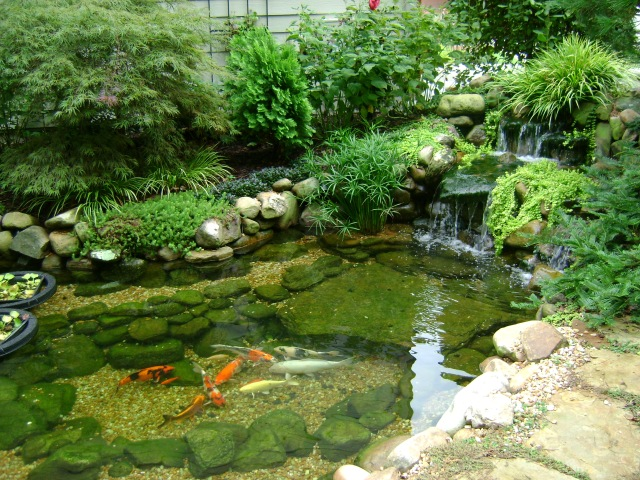 Koi ponds don t need to look like black liner pools for Koi pond liner
